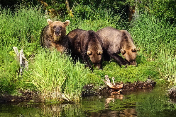 kamchatka-bears-1