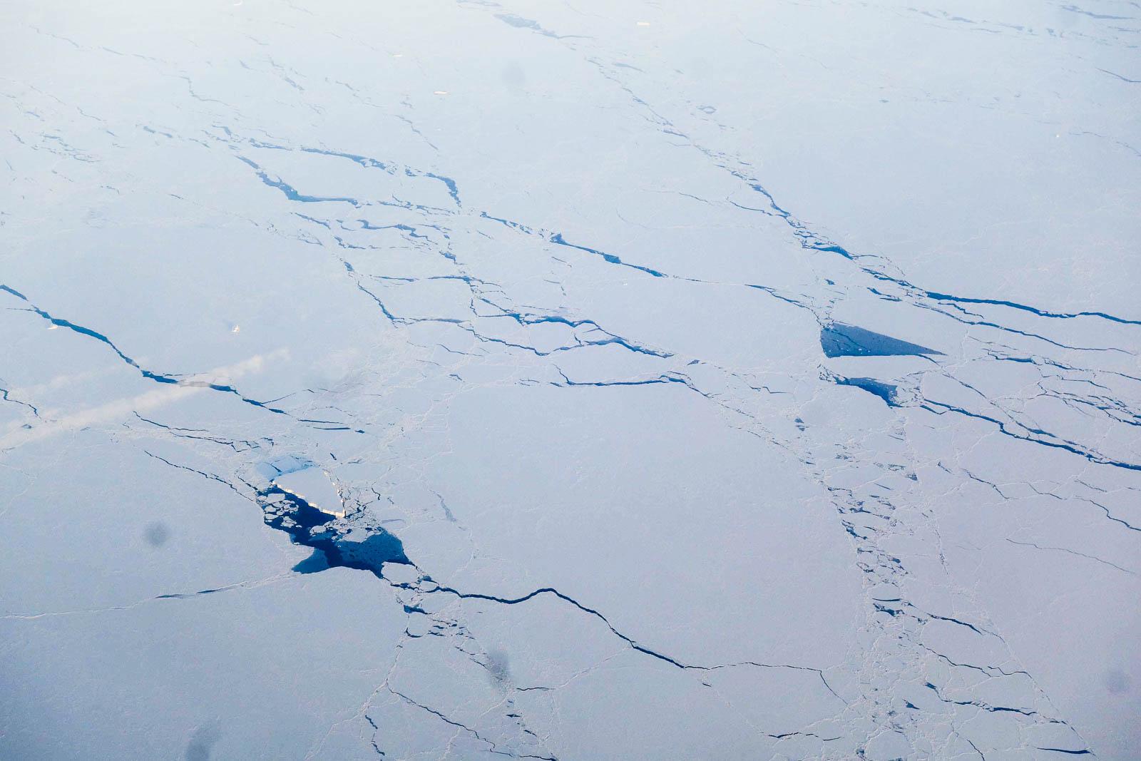 Антарктический припой