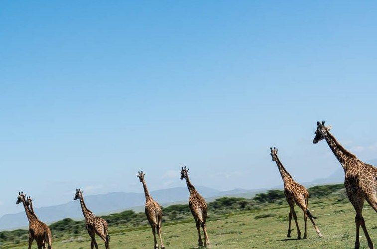 tanzania-safari-1