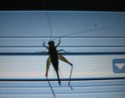 bug 2