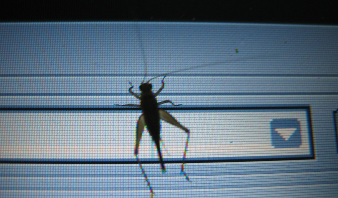 bug_on_screen