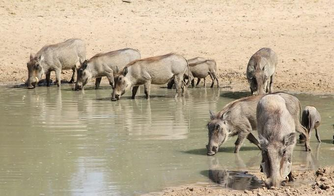 атаки watering hole