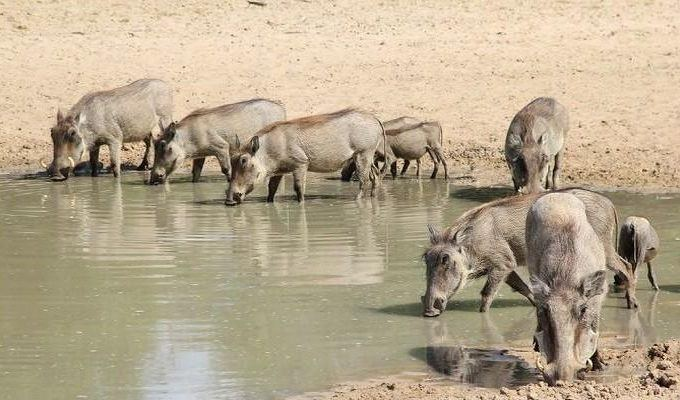 watering-hole
