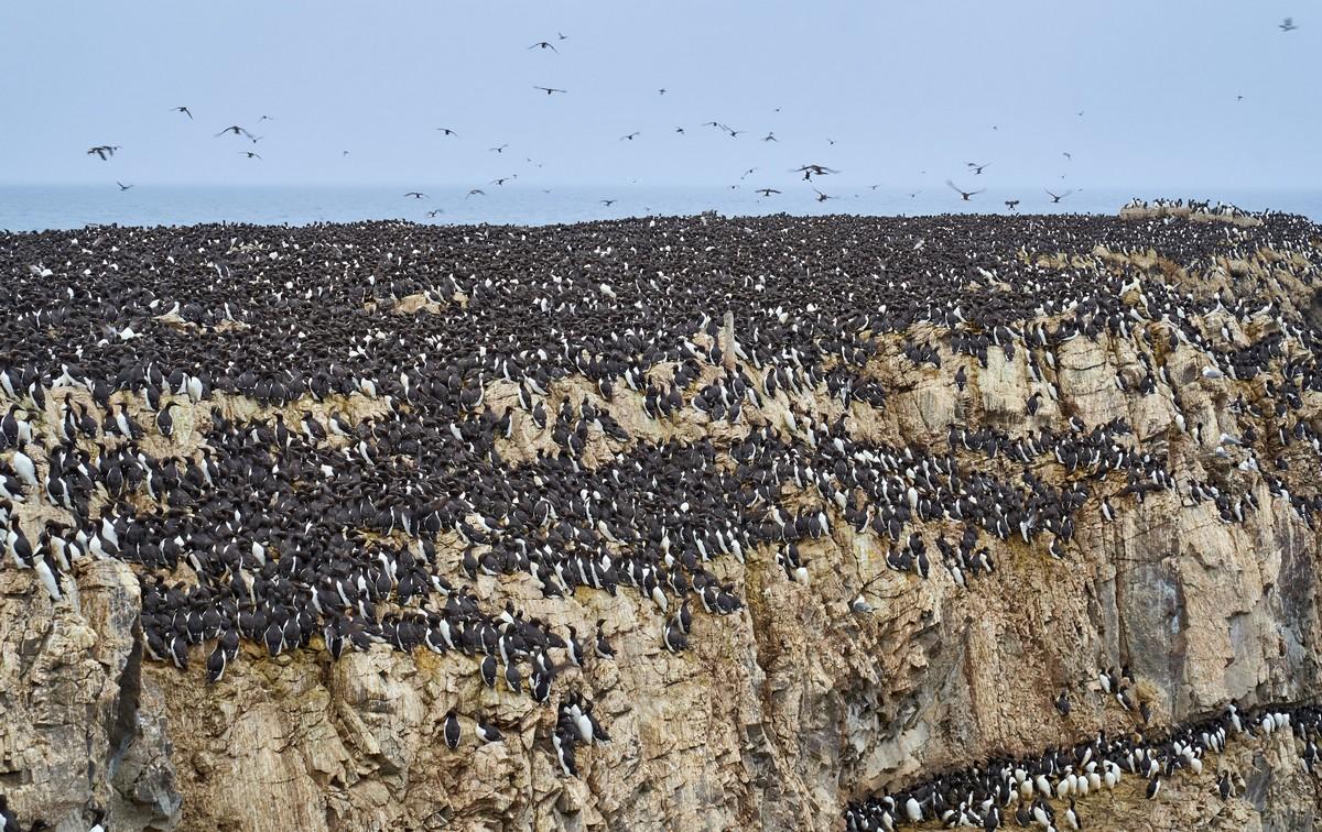 Tyuleny – the resort-island… for seals.